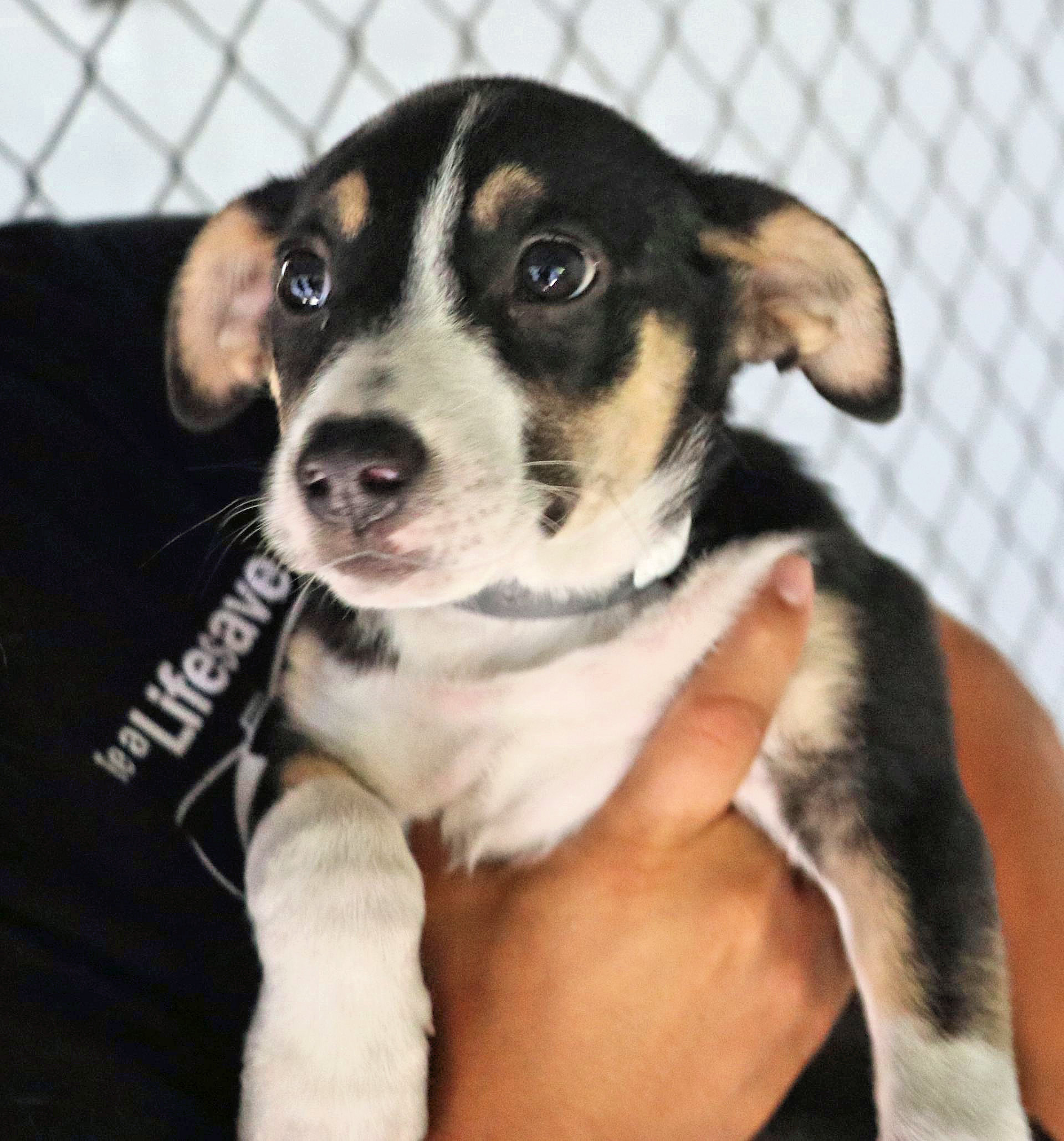 PawSafe Animal Rescue - Dogs for Adoption