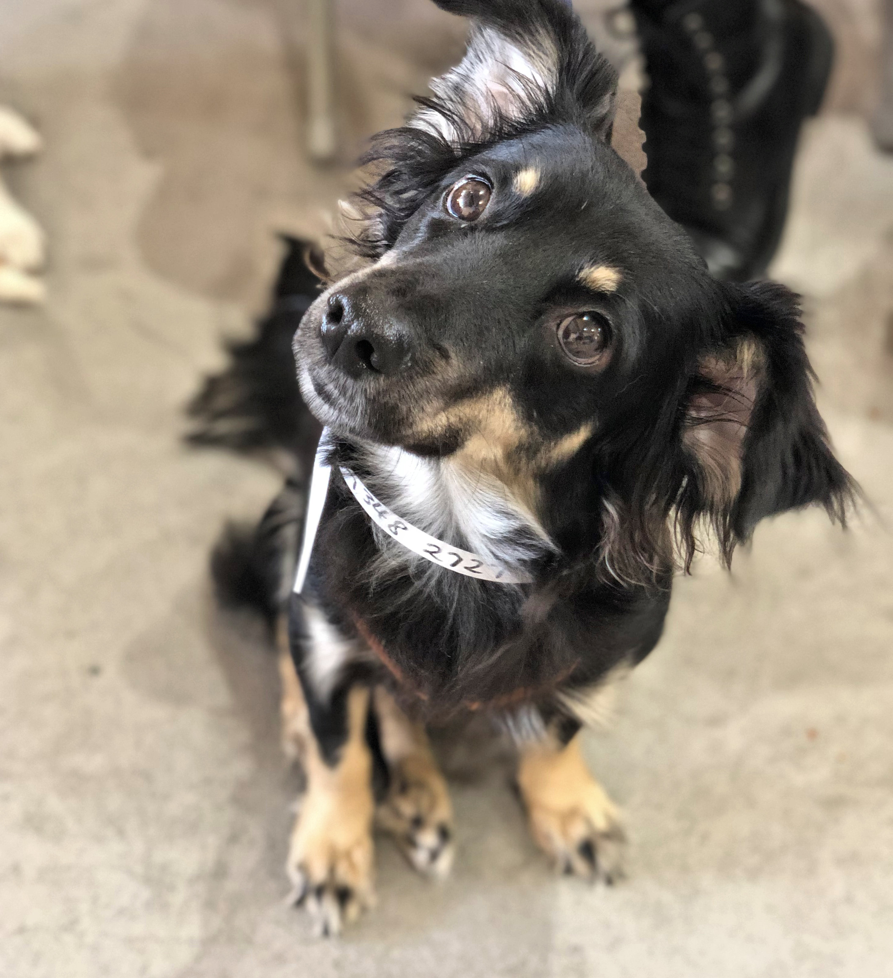 Pawsafe Animal Rescue Dogs For Adoption