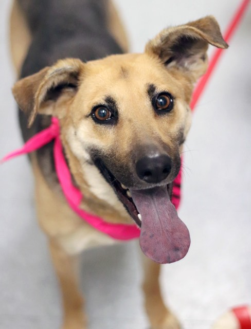 Pawsitive Tails Adoptable Dogs