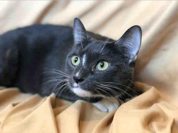 Search for Adoptable Pets