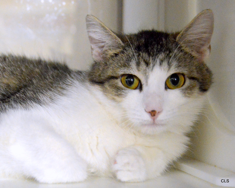 Cat and Kitten Available for Adoption in Kansas City - Wayside ...