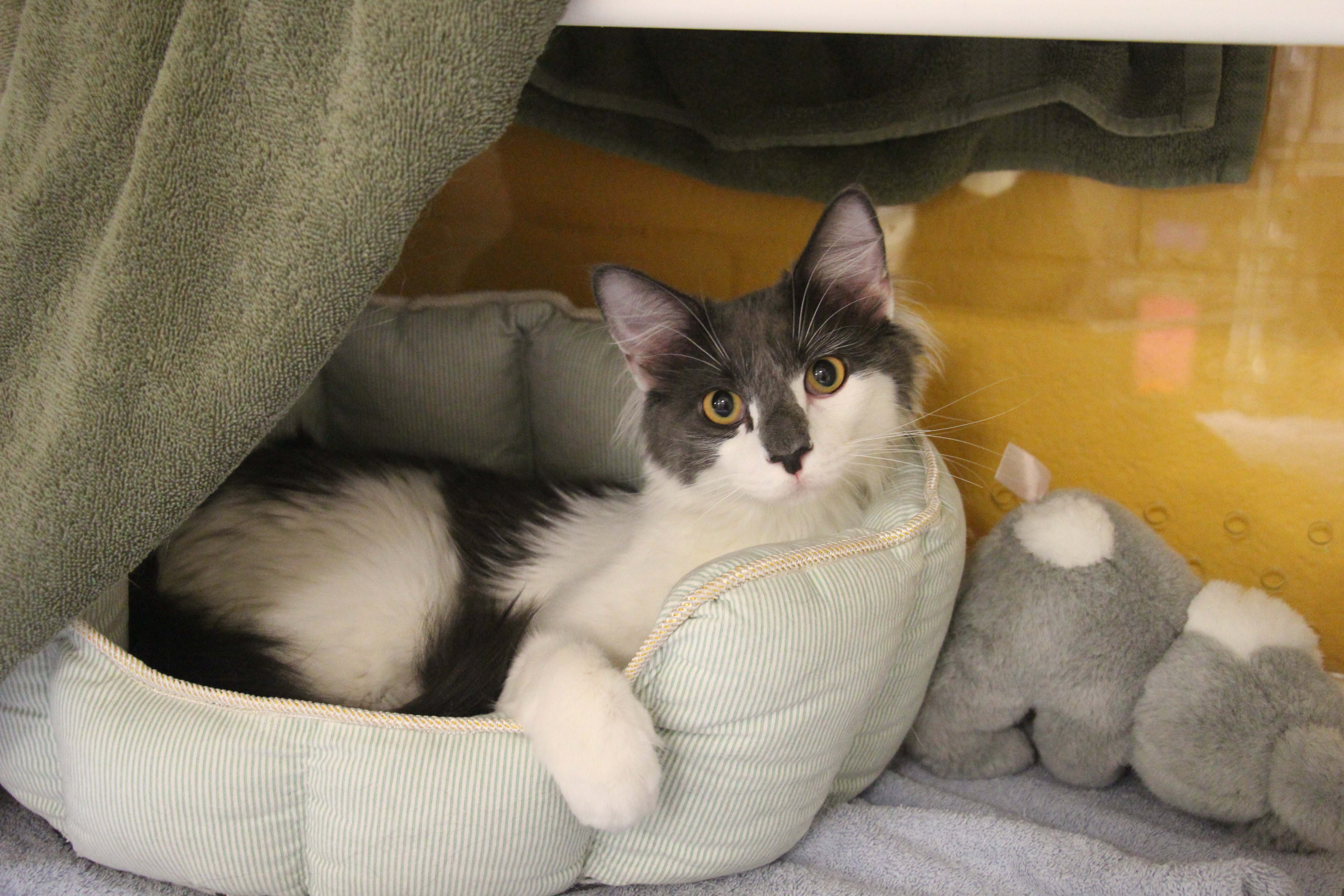 Cat and Kitten Available for Adoption in Kansas City - Wayside Waifs ...